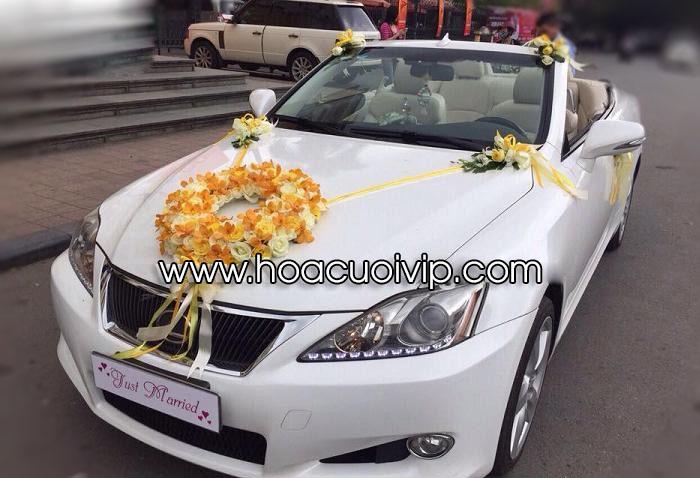 xe cưới lexus is250c mui trần